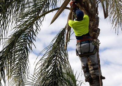 Property-Maintenance-Tree-Trimming